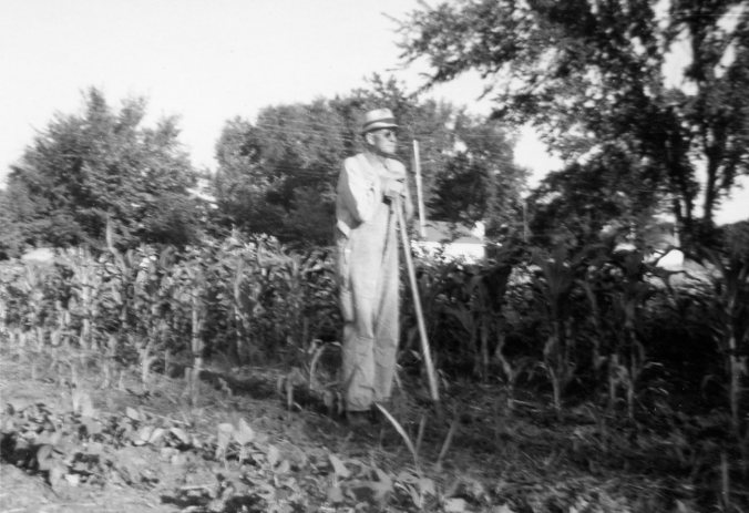 Grandpa in Garden, corn