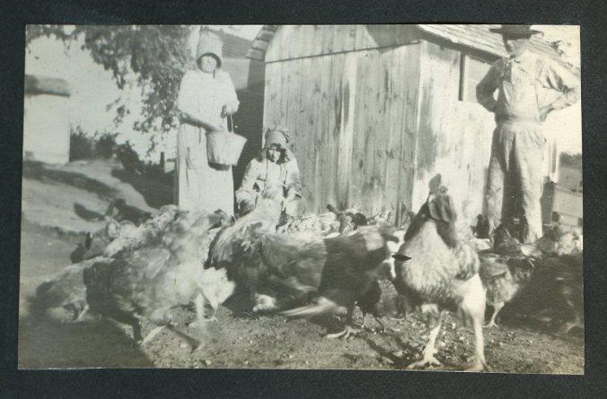 Farm, Chickens